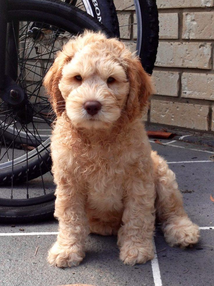 Cute Puppy with NO Fleas!