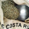 Quest Coffee Cafe de Costa Rica organic unroasted green Arabica coffee in hessian bag ready for roasting.