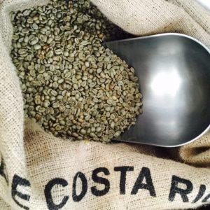Quest Coffee Cafe de Costa Rica organic unroasted green Arabica coffee in hessian bag ready for roasting.