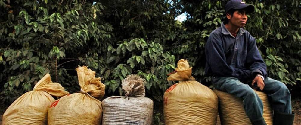 Guatemala- Coffee
