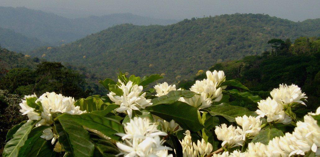 MEXICOFLOWERING PLANTS