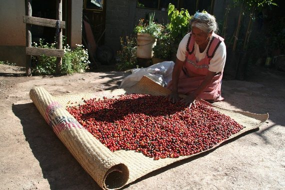 drying-coffee-oaxaca