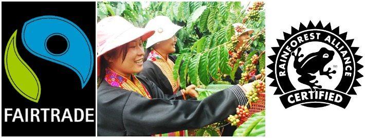 Rainforest Alliance vs Fair Trade Certified explained
