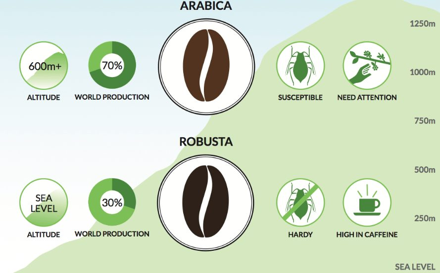 The difference between Arabica and Robusta coffee beans.