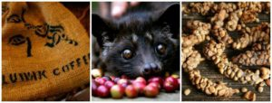 Why we will never sell Kopi Luwak coffee at Quest