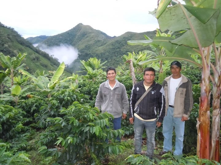 High altitude coffee plantation