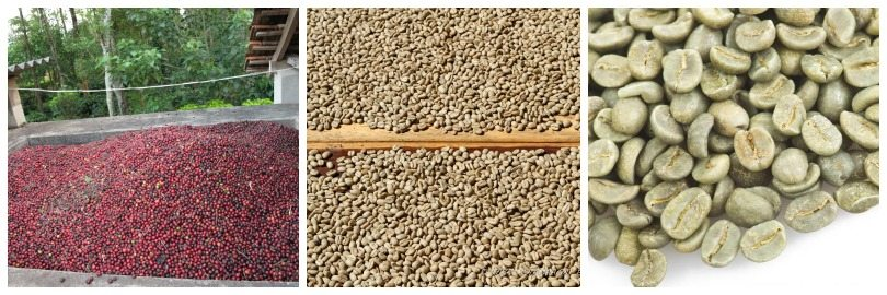 Green coffee bean characteristics