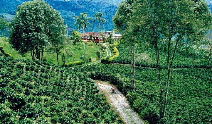 Colombia Coffee Planatation